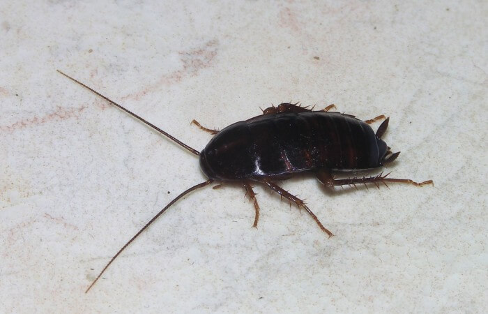 Cockroach_May_2007-1