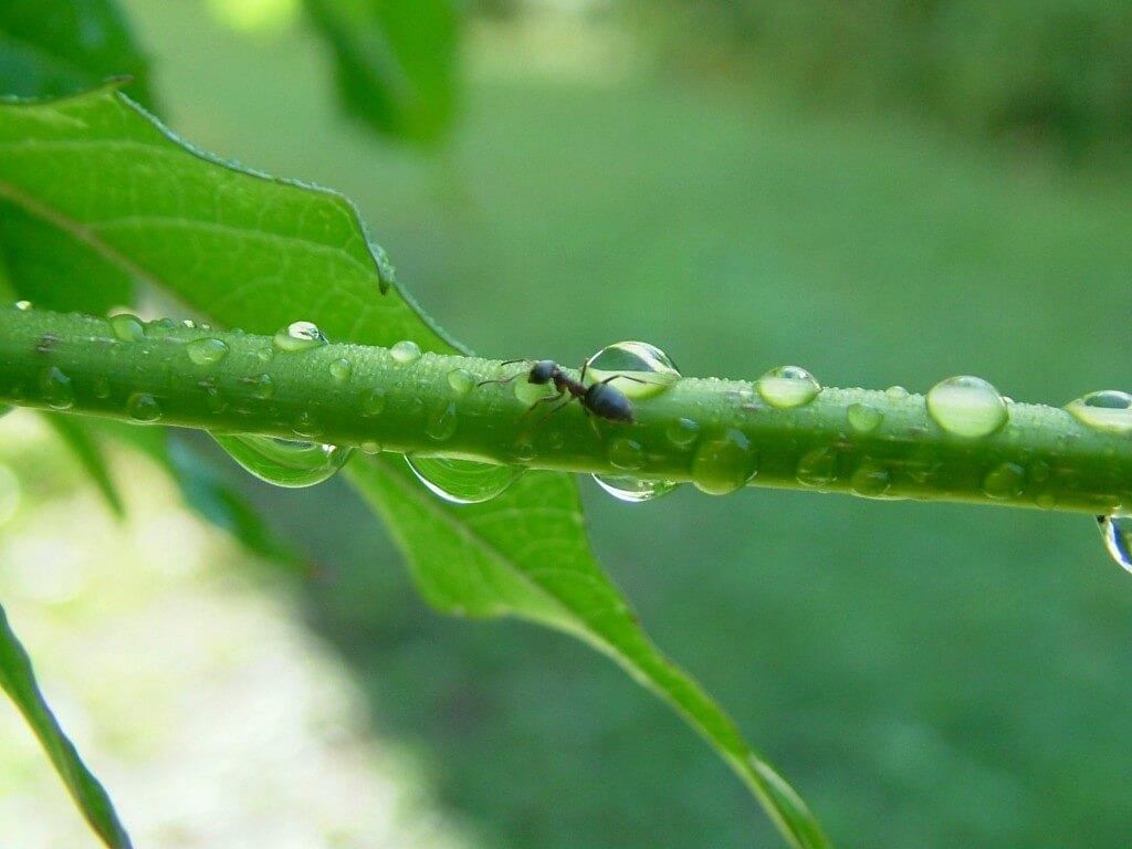 ant exterminator bristol