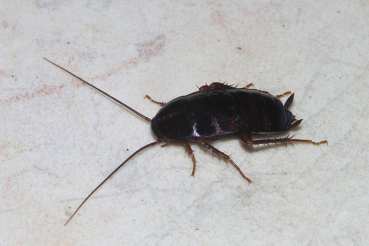 cockroach exterminator