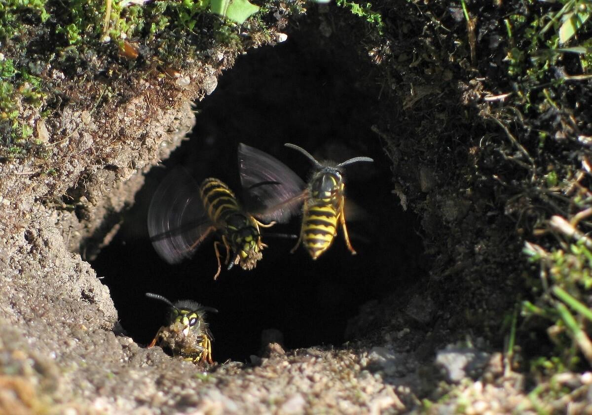 wasp exterminator bristol