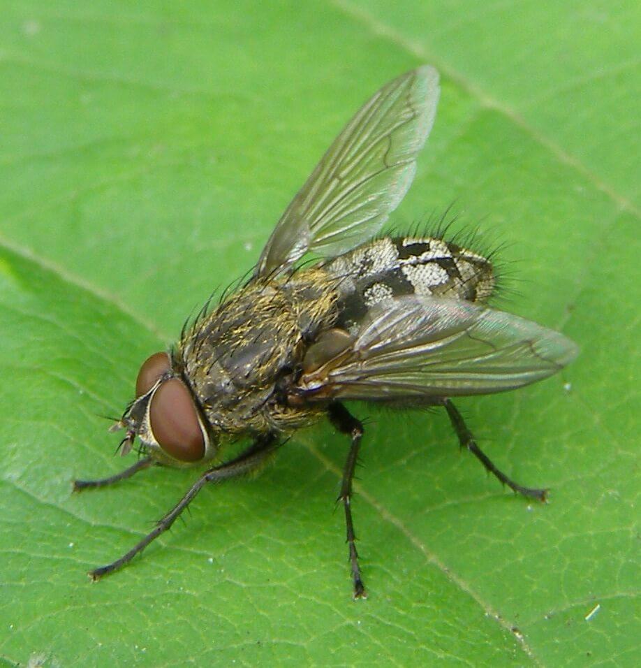 cluster fly exerminator bristol